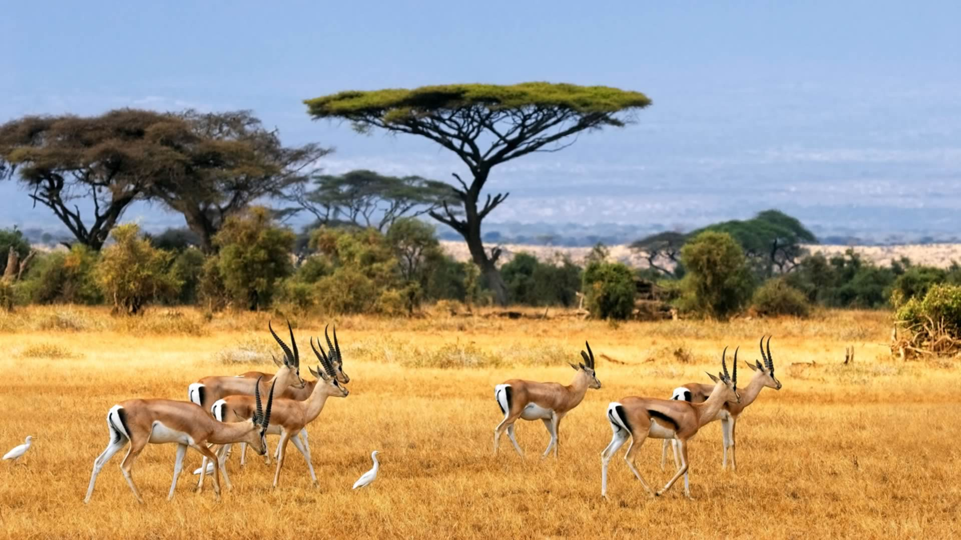 Savane avec animaux Afrique