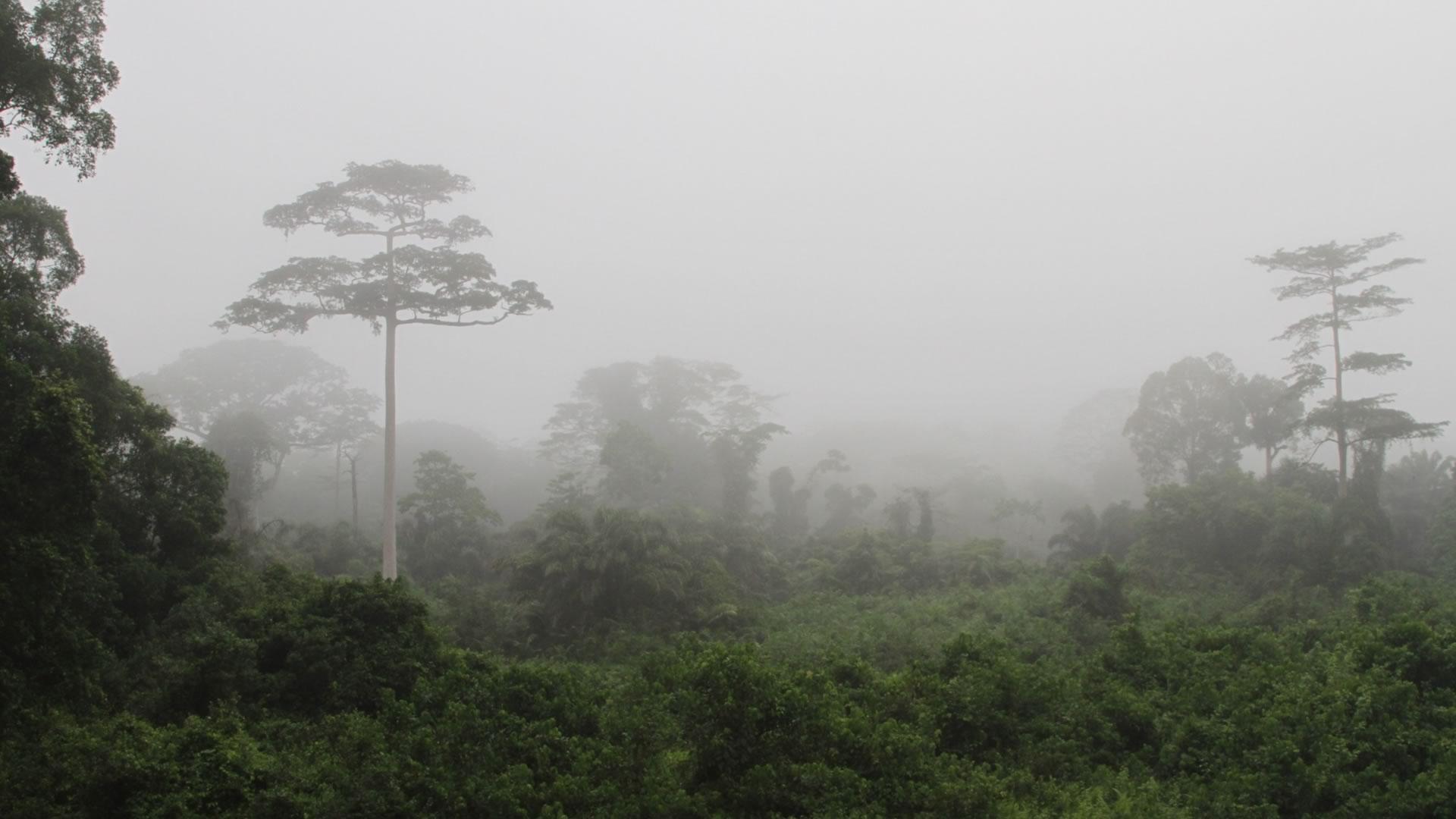 côte d'ivoire paysage