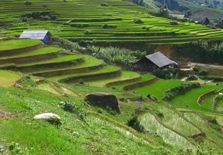 rizières vietnam