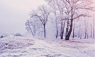 Arbres givrés et neige russie
