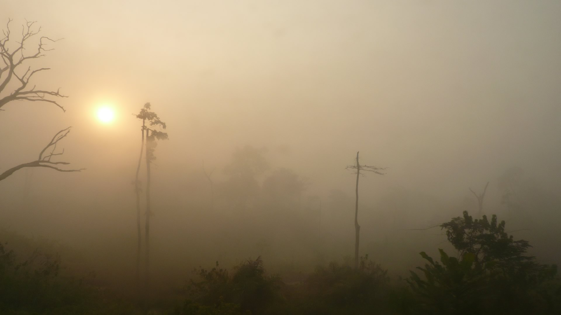 Nature avec brume Cameroun