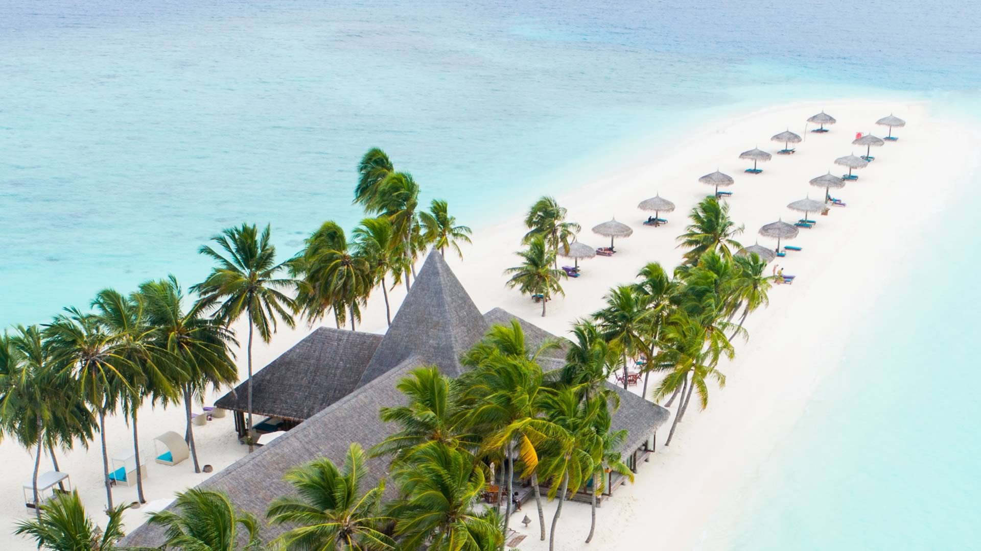 Plage palmiers île